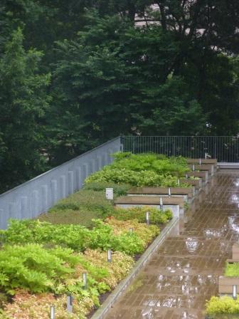雨の日「桐朋の丘」